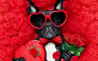 Pet Lovers Valentine's Day Quiz