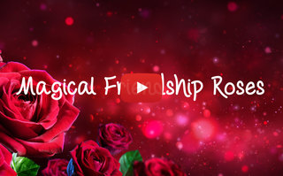 Magical Friendship Roses