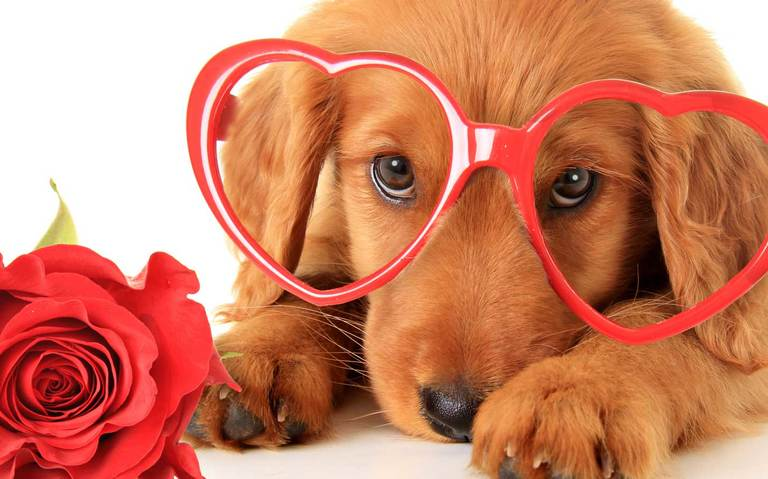 Each year about nine million people buy a Valentine's Day gift for who?
